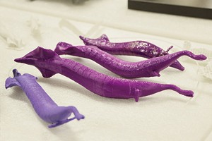 These 3-D printed models of the Tully monster were created by the Illinois State Museum Research and Collections Center in Springfield. - PHOTO BY PATRICK YEAGLE