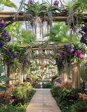 The Chicago Botanic Garden will host an orchid show featuring a tropical theme and more than 10,000 orchids February 9-March 24 indoors at the garden in Glencoe. - PHOTO COURTESY CHICAGO BOTANIC GARDEN