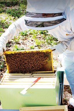 Brothers Seve and Gage recently got their own hives to care for and harvest. - PHOTO BY JENNIFER AHOLT