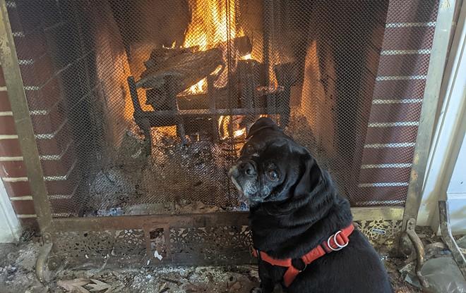 Champ the Wonder Pug enjoys a roaring blaze. - PHOTO BY BRUCE RUSHTON