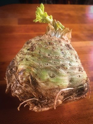 Celeriac - the ugly duckling of the produce aisle. - PHOTO BY ANN SHAFFER GLATZ
