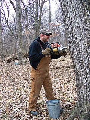 Stephen Funk drills into one of the hundreds of maple trees at Funk's Grove near Bloomington to collect sap for the family's famous maple sirup. - PHOTO BY DEBBY FUNK