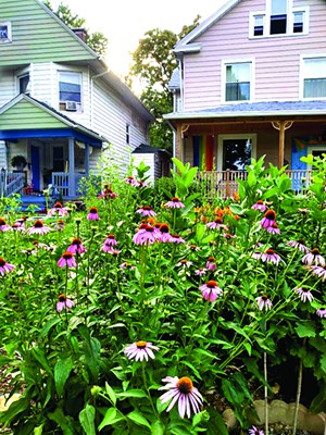 The author's front yard on North Sixth Street, which is in the process of rewilding. - PHOTO BY CAREY SMITH