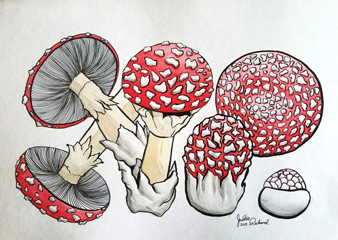 """""""Amanita Muscaria"""" in pen and ink by Justin Pickard whose work is on display at Palouse Country Candy downtown during Pullman's ArtWalk."""