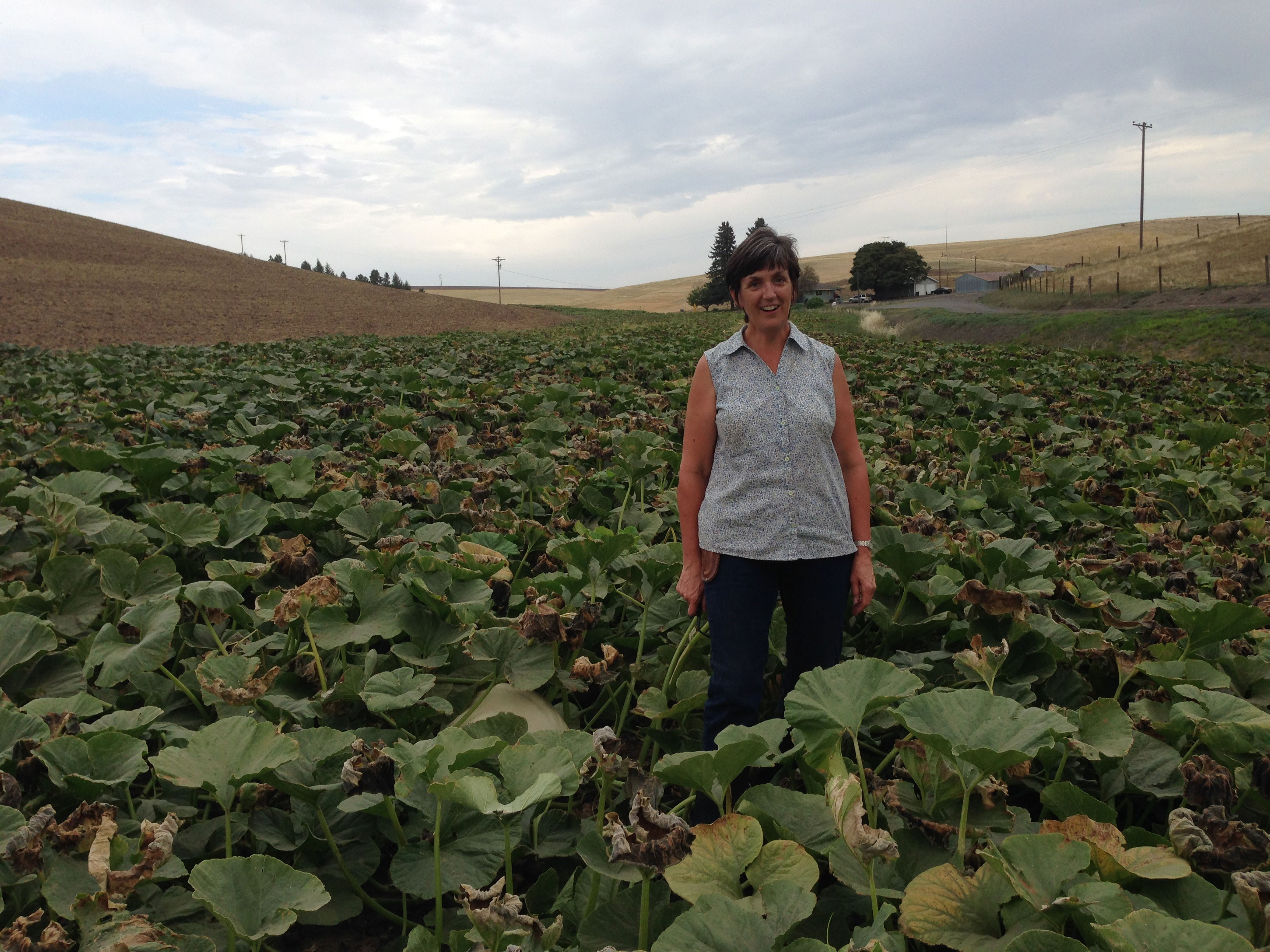 Polly Dennler stands in a field full of pumpkins.