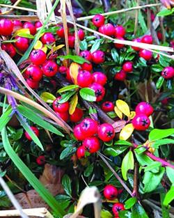 360-bearberry-1107.jpg