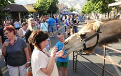 Izzy the camel gets a little to close for comfort for Jessica Davidson of Clarkston as she tries to feed him at Clarkston Alive After 5 in 2011. Lewiston Tribune photo