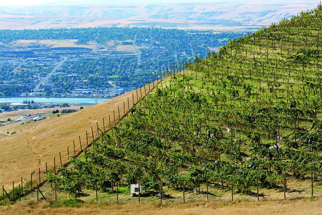 Spiral Rock Vineyard sits along the Old Spiral Highway and overlooks the Lewiston-Clarkston Valley.