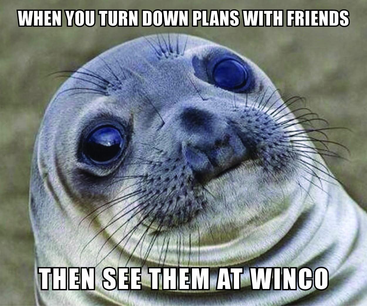 AwkwardSeal_Winco.jpg