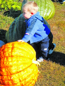 Pumpkin patches can offer bigger pumpkins than grocery stores.