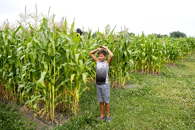 """""""It's taller than me,"""" Jarrett Barnes, 8, says of the corn that the Wes Barnes says should be ready to harvest within two weeks as they walk about their farm on Saturday. August Frank/Tribune - AUGUST FRANK/TRIBUNE"""