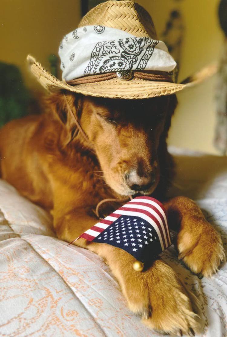 Dog-Judy-Fuller-Lewiston.jpg