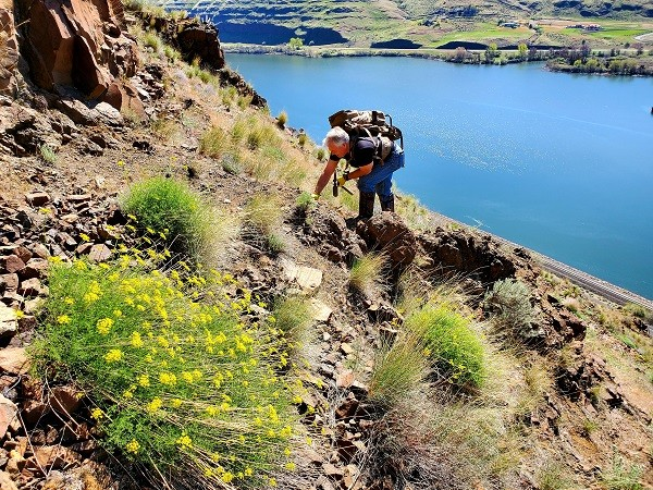 Randy Squires, of Lewiston, searches a steep hillside for unusual rocks last week on a rockhound hunt outside Clarkston. Squires is president of the Hells Canyon Gem Club. - JENNIFER K. BAUER