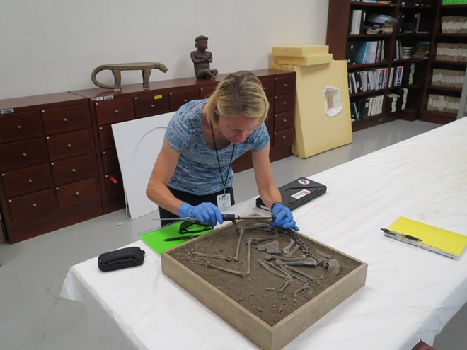 Erin Thornton, associated professor of anthropology at Washington State University, measures the skeleton of a ritually deposited archaeological turkey in a lab space at the National Museum of Anthropology (Museo Nacional de Antropología) in Mexico City, Mexico. The box contains the nearly complete skeleton of turkey that was sacrificed and buried as a ritual offering. - ERIN THORNTON