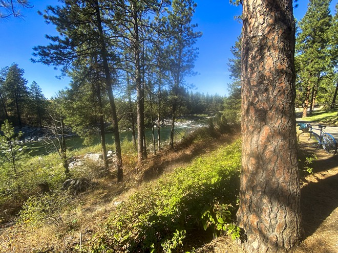 The Spokane River flows near the Centennial Trail in the Spokane County on a recent fall day. The gentle terrain of this section of the route lends itself to a wide variety of recreation like bicycling and walking. - ELAINE WILLIAMS/360