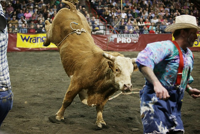 05 Jello Shots goes after a bullfighter after knocking off rider Jace Catlin, not pictured, of Toledo, Wash., during Flight 3. Catlin rode 2.84 seconds before falling off the bull. - YOUNG KWAK