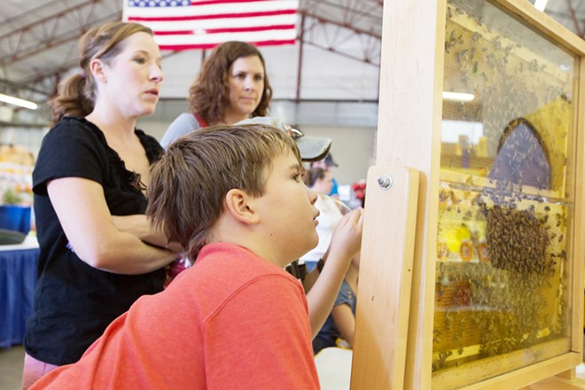 10 year old Isiah Coe looks at a hive at the Inland Empire Beekepers booth. - YOUNG KWAK