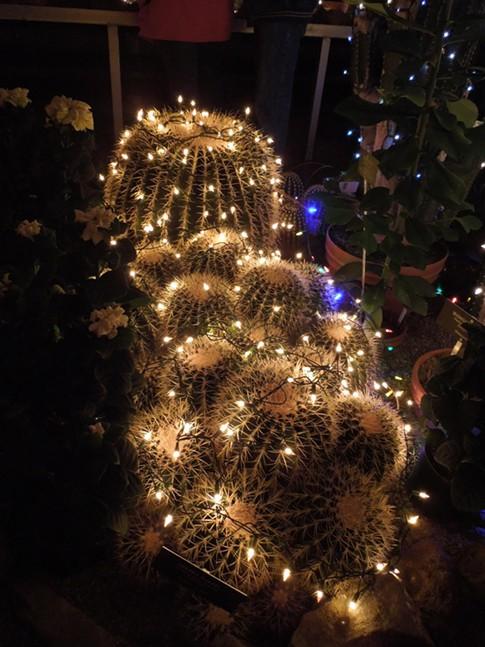 christmas lights manito park spokane