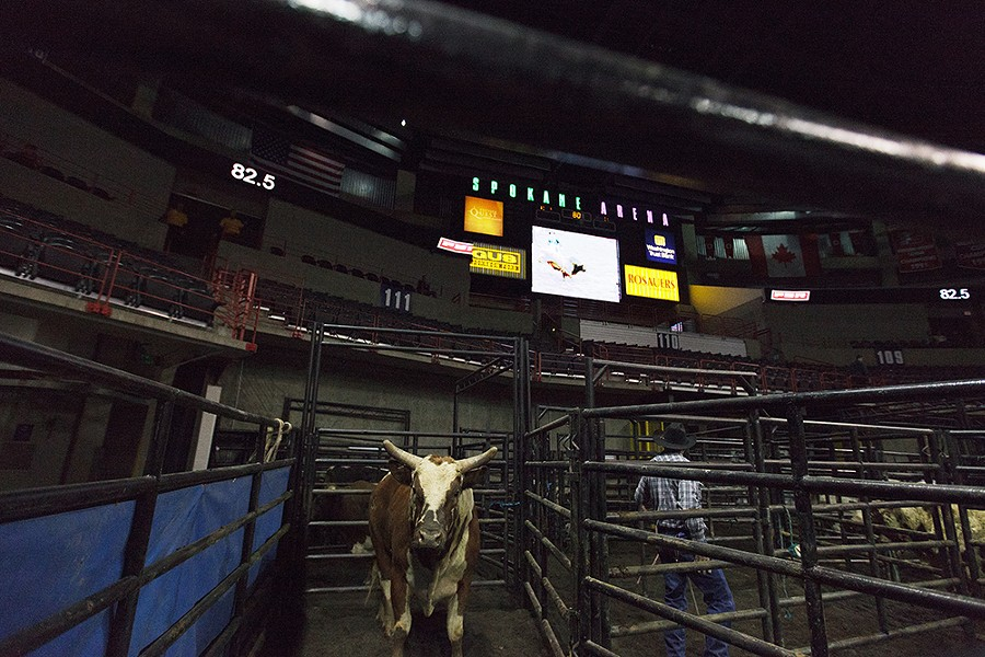 A bull stands in a pen during the Wrangler Professional Bull Riders Classic on Saturday. - YOUNG KWAK