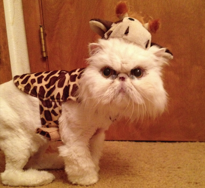 Abby the giraffe, from Spokane. Submitted by Bruce D., an Inlander staffer.