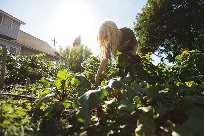 Project Hope volunteer Sylina Alton, 16, harvests beets from a garden last September. - YOUNG KWAK