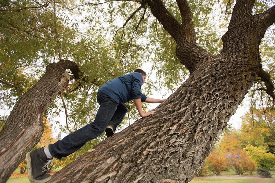 Alek Lutsenko, 13, climbs a tree. - YOUNG KWAK