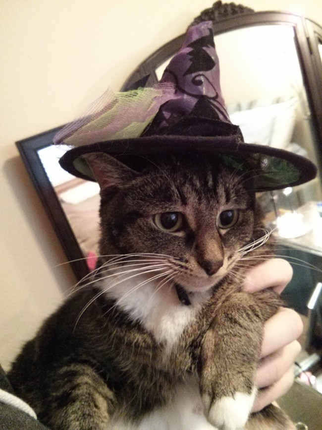 "Alice ""Laggy"" Scott, the beloved cat of Listings/Cat Friday editor, Chey Scott, as a little witch-sorceress. Alice is working on spells to create an invisible barrier around her yard to keep the annoying neighbor cat across the street from bothering her."