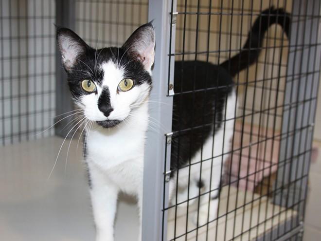 Pet value adopt a cat