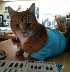 CHEY SCOTT - Bento the Keyboard Cat!