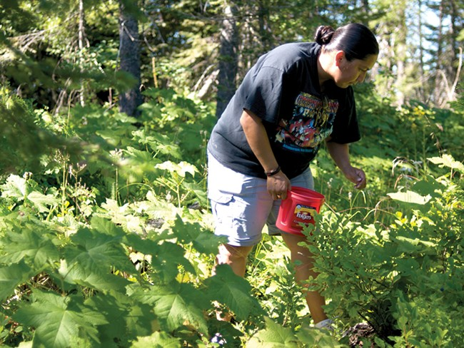 Bobbie White, a member of the One Sky/One Earth Food Coalition, picks huckleberries outside Plummer. - GUY HAND