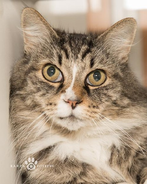 Buddha is a spayed adult female who's very calm and relaxed. Pet ID No. 6624. - SCRAPS