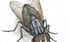 Bug-pocalypse