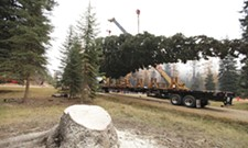 Capitol Christmas Tree stops in Spokane