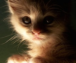 dreamcat.jpg