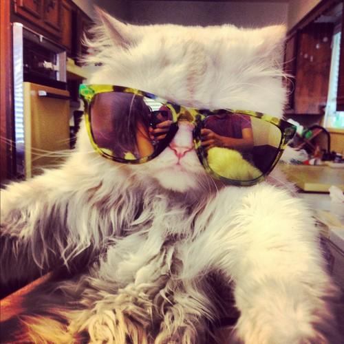 fyeahcats.jpg