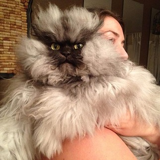 Thousands of cat lovers around the world remember the late great Col. Meow. - COLONEL MEOW