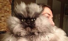 CAT FRIDAY: A tribute to Colonel Meow