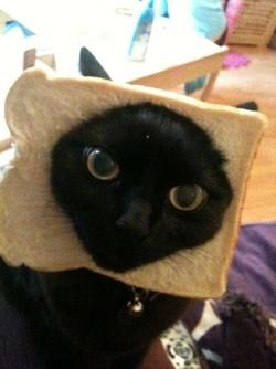 1.cat.jpg