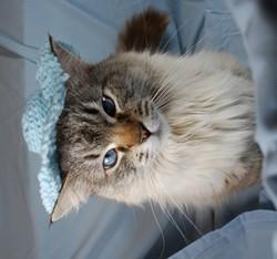 cats_in_hats15.jpg