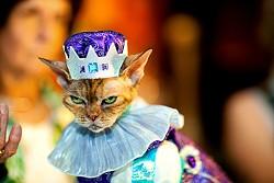 kingcat.jpg