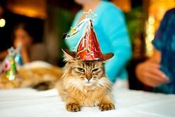 partyhatcat.jpg