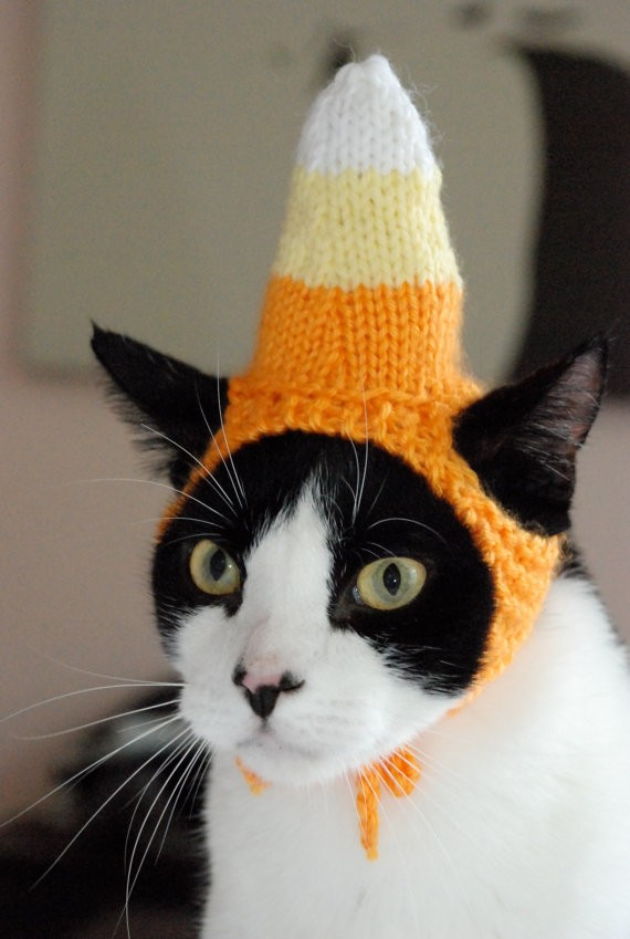 Cat With Silluy Hats