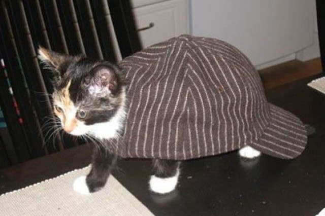 the_cat_in_the_hat.jpg