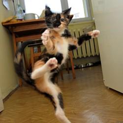 karate_cat.jpg