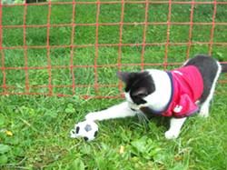 soccercat.jpg