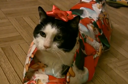 wrappedcat.jpg