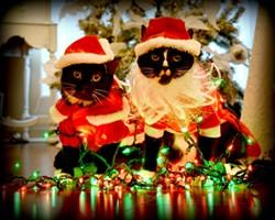 xmascats1.jpg