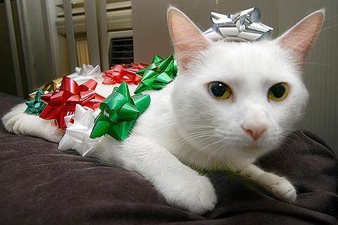 xmascats8.jpg