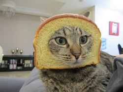In case anyone forgot, this is cat breading.
