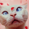 CAT FRIDAY: Happy Meow-lentine's Day!